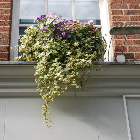 mooie plantenbak