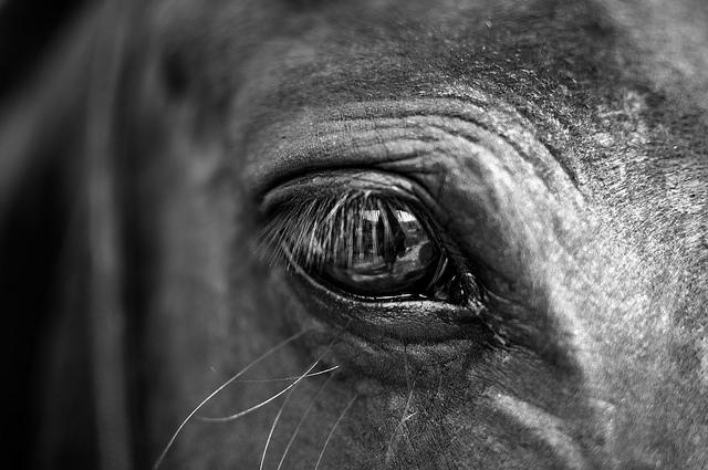 Een close-up van een paard. Het oog is goed te zien. Er is iets aan de onschuld van paarden, wat mij makkelijk boos of verdrietig maakt.